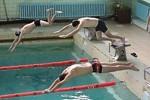 19 октября молодежь ОАО «НПП «Завод Искра» приняла участие в соревнованиях по плаванию, прошедших в рамках областной программы «PROдвижение-2013».