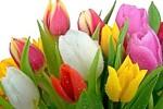 Поздравление с Международным женским днем — 8 марта.